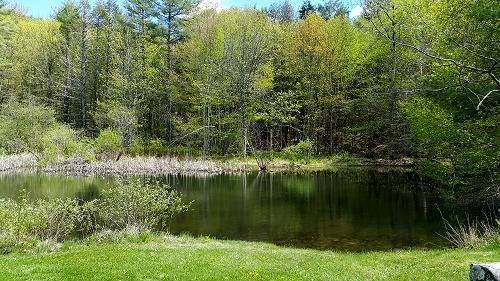 Pond at Snow Farm ©Patricia C Vener-Saavedra taken May 2018