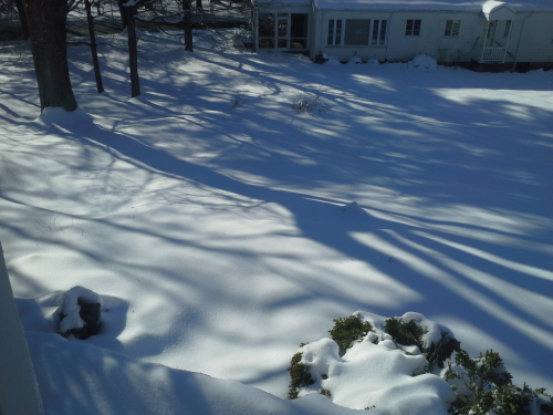 photo of long shadows of trees on a sunny winter day